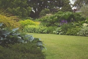 Catering for Your Lawn and Garden Like A Pro