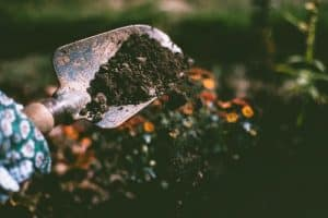 how to add calcium to your garden