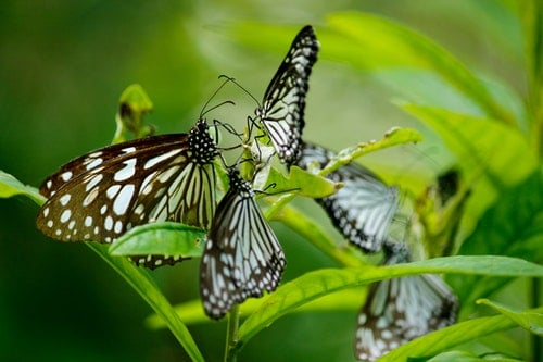 Guide to Butterflies, How To Stop Their Decline