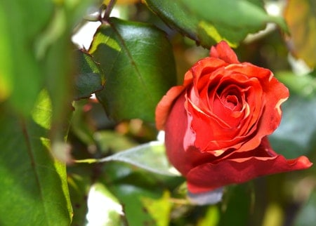 How to Get Rid Of Caterpillars On Rose Bushes
