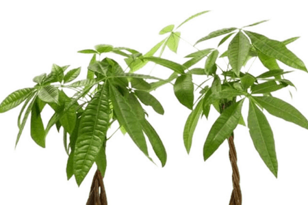 Important tips to help you grow your money tree
