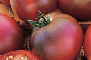How to Grow Black Russian Tomatoes