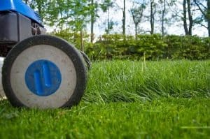 What To Do After Scarifying Lawn