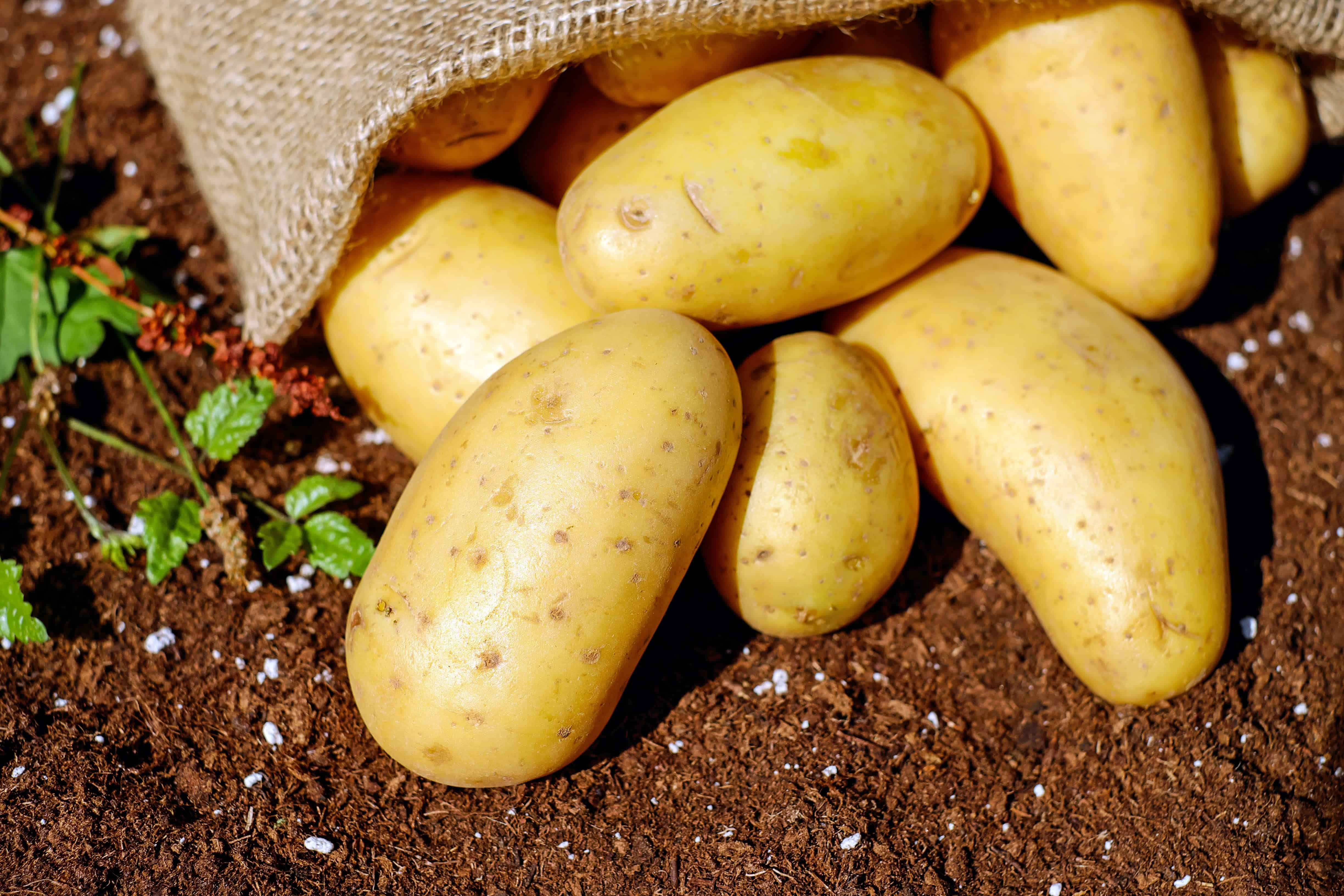 How to Care for Accent Potatoes