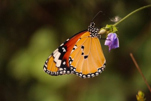 How to Stop The Decline Of Butterflies