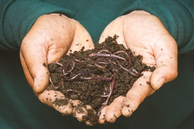 Best Compost for Bay Trees