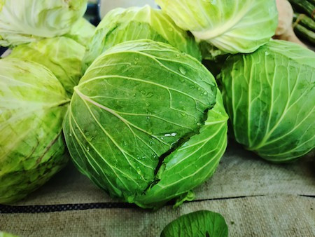Planting young cabbages in your garden