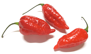 Can Ghost Chilli Peppers be Grown Indoors